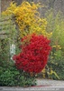 Herbststrauch