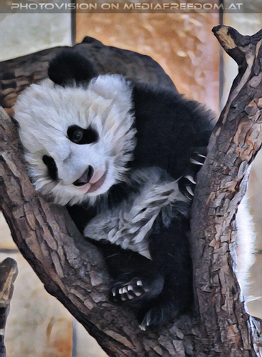 Kleiner großer Panda 17: Fu Bao