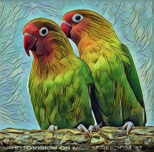 Bird care 6