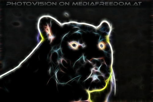 Black Jaguar Vision