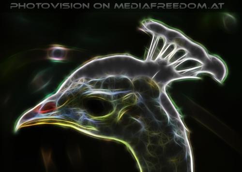 Pfaukopf Vision