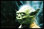 Yoda Portrait