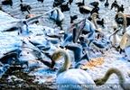 Birdland 22