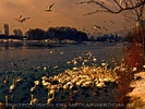 Birdland 23
