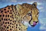 Gepardenfamilie 07