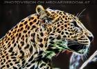 Leopard 07