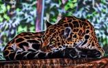 Leoparden Vision