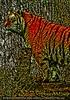 Pop Tiger