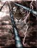 Tiger Storm
