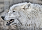 Wolf Science Center 04