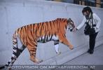 Sibirischer Tiger 10