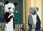 Welcome Panda Fu Long 03