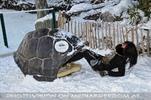 Schildkröte Eva 5