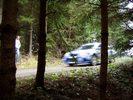 Hollenbach Waldstück vor Ziel