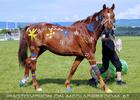 Horse agility 1