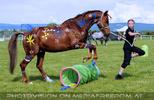 Horse agility 2