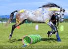 Horse agility 3