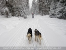 Musher Dream 47
