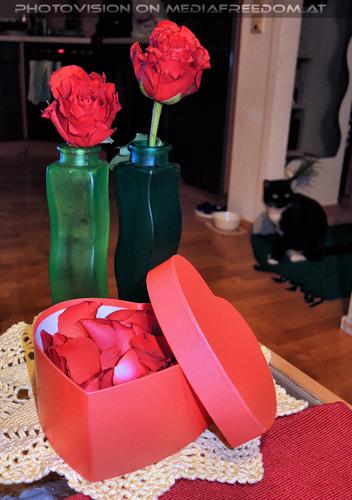 Celebrate Valentine 37: Ebony