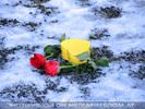 Celebrate Valentine 24