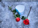 Celebrate Valentine 25