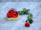 Celebrate Valentine 27