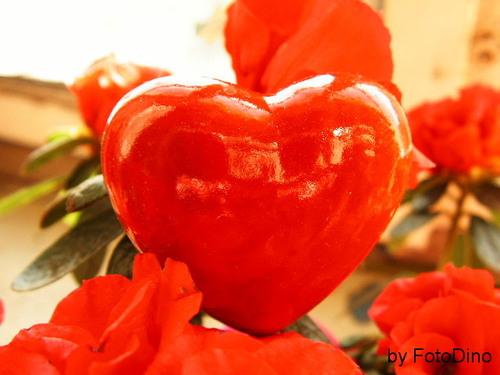 Auch Pflanzen haben ein Herz