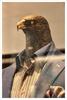 Greifvogel als Schaufensterpuppe