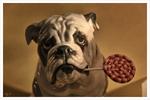 Schaufenster Bulldogge mit Lolly