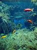 Giftfass im Meer