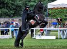 Zorro 09