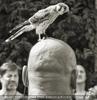 Vogel sitzt auf des Henkers Kopf