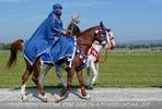 Die Pferdeshow 11 - Araber