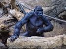 Gorilla Bai 01