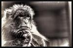 Affe in Denkerpose