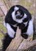 Bei den Lemuren 01