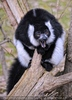 Bei den Lemuren 02