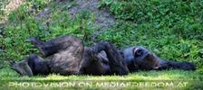 Gorilla Bai 07