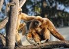 Hey Freund Gibbon