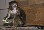 Im Affenhaus 06