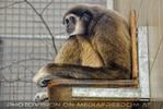 Im Affenhaus 08