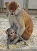 Im Affenhaus 12