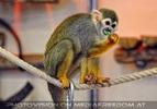 Im neuen Affenhaus 07