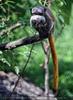 Im neuen Affenhaus 09