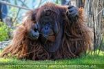 Orang forscht