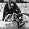 Schimpansen Pärchen
