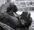 Schimpansin schütz Baby