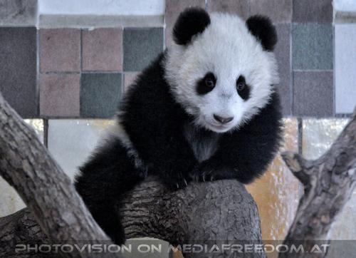 Kleiner großer Panda 06: Fu Bao