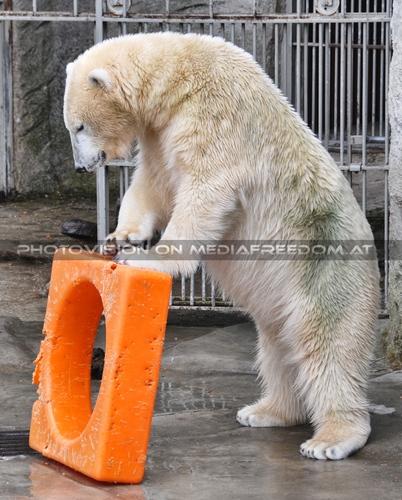 Das hält was aus: Eisbär