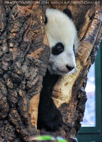 Kleiner großer Panda 02: Fu Bao